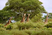 AFW 09 TL0014 01