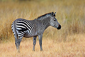 AFW 10 AC0004 01