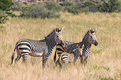 AFW 10 KH0005 01