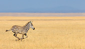 AFW 10 KH0017 01