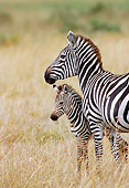 AFW 10 MC0003 01