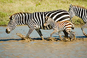 AFW 10 MC0010 01