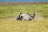 AFW 10 MC0015 01