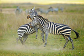 AFW 10 MC0017 01