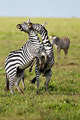 AFW 10 MC0018 01