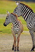 AFW 10 MH0005 01