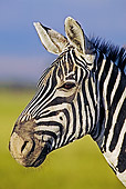 AFW 10 MH0011 01