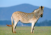 AFW 10 MH0013 01