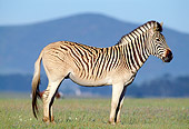 AFW 10 MH0014 01