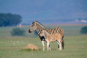 AFW 10 MH0018 01