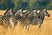 AFW 10 MH0019 01