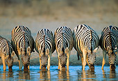 AFW 10 MH0020 01