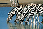 AFW 10 MH0021 01