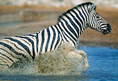 AFW 10 MH0024 01