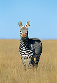 AFW 10 MH0034 01