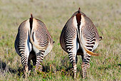 AFW 10 MH0035 01
