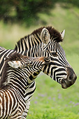 AFW 10 MH0036 01