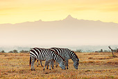 AFW 10 MH0038 01