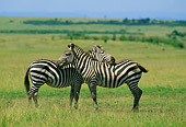 AFW 10 DB0001 01