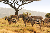 AFW 10 DB0005 01