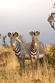 AFW 10 DB0006 01