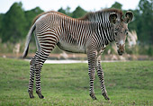 AFW 10 GR0001 01