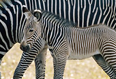 AFW 10 GR0002 01
