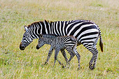 AFW 10 NE0001 01