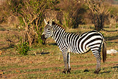 AFW 10 NE0002 01