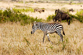 AFW 10 NE0003 01