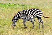 AFW 10 NE0004 01