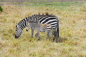 AFW 10 NE0005 01