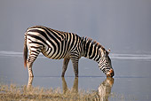 AFW 10 RF0010 01