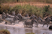 AFW 10 RF0011 01