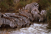 AFW 10 RF0013 01