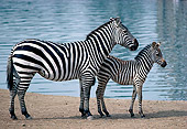 AFW 10 RK0027 03
