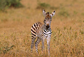 AFW 10 TL0004 01