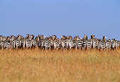 AFW 10 TL0011 01