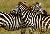 AFW 10 TL0013 01