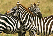 AFW 10 TL0014 01