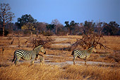 AFW 10 TL0016 01