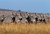 AFW 10 TL0017 01