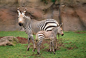 AFW 10 TL0018 01
