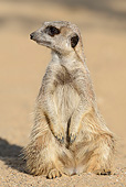AFW 12 AC0009 01