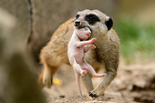 AFW 12 AC0010 01