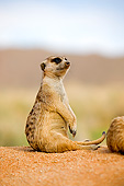 AFW 12 GL0005 01