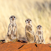 AFW 12 KH0002 01