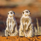 AFW 12 KH0009 01