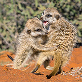 AFW 12 KH0013 01