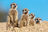 AFW 12 KH0030 01